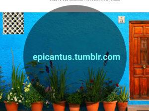 Epicantus photos